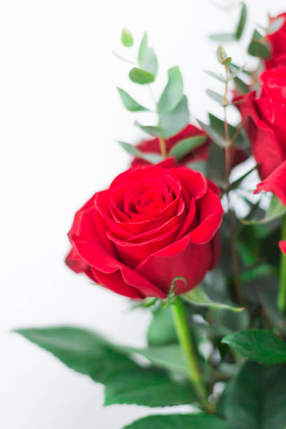 Bouquet of red roses on a white background a gift for a loved one picture id1134987713?b=1&k=6&m=1134987713&s=612x612&w=0&h=let0hcnwajr0jkmlghg7dfxwarhfynipjnrko0isfic=
