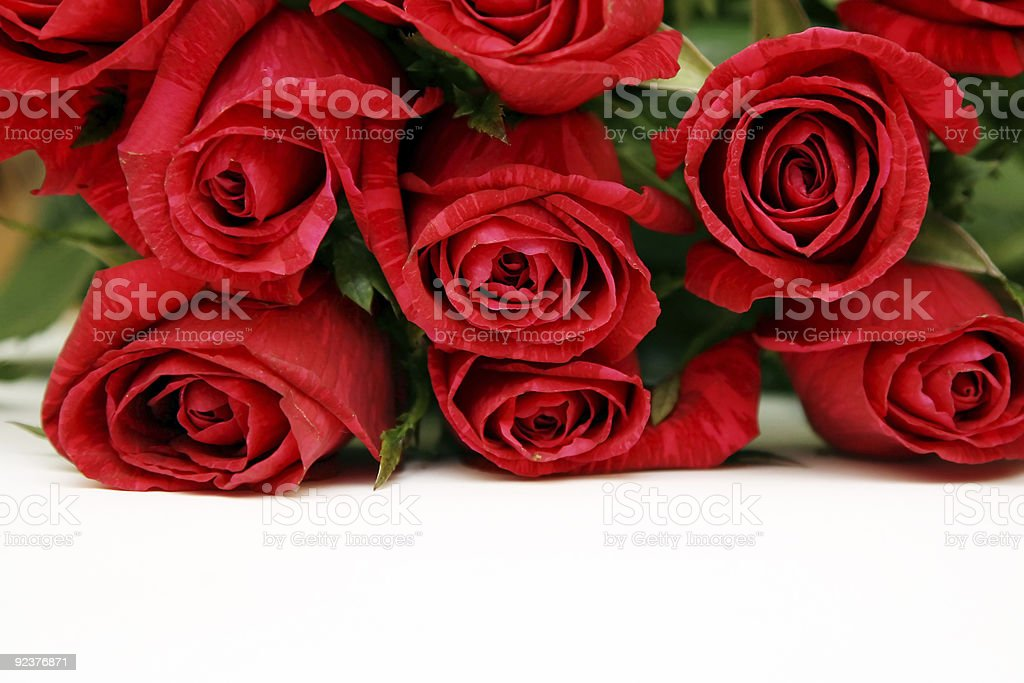 Bouquet of red roses on a white background royalty-free stock photo