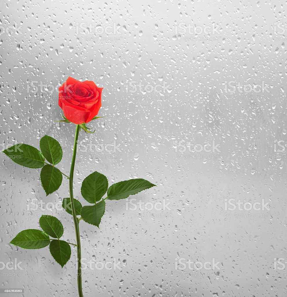 Bouquet of red roses on the background of a window stock photo