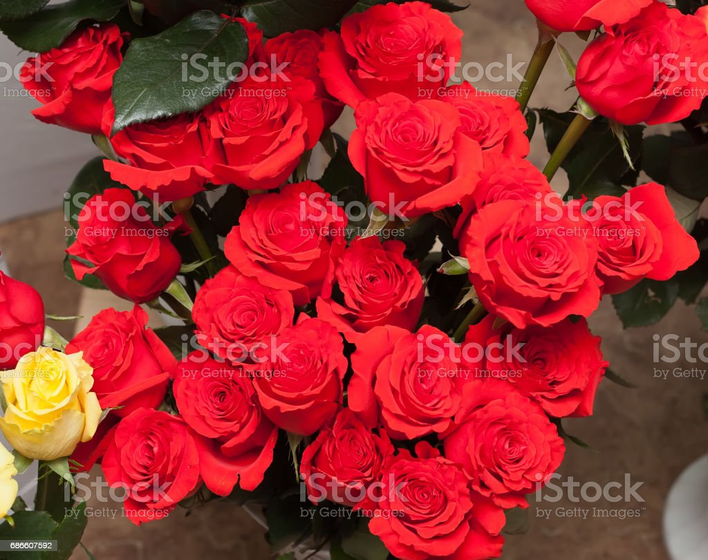 A bouquet of red roses royalty-free stock photo