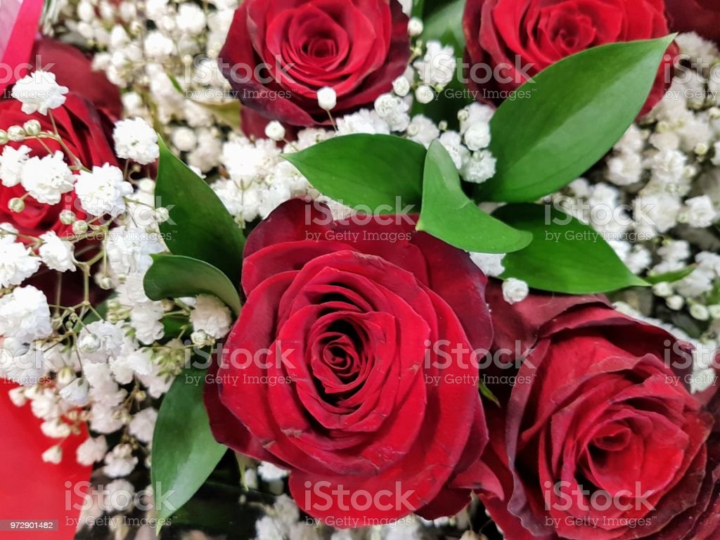 Bouquet Of Red Roses With Small White Fliwers Stock Photo More