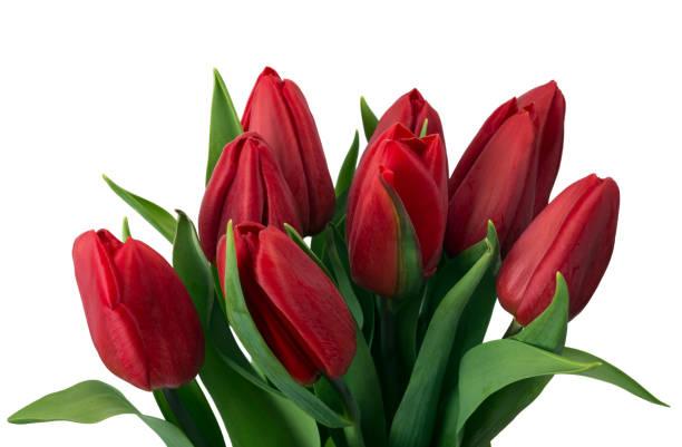 bouquet von roten tulpen, textfreiraum. frühlingsblumen sie frischen, mock-up für muttertag, valentinstag oder hochzeit grußkarte - hochzeitsspiele eltern stock-fotos und bilder