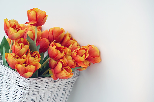 Bouquet of red tulips in a basket on a white background