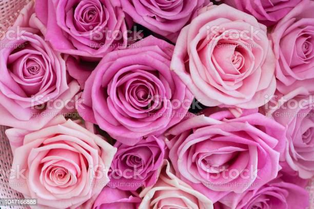 Bouquet of roses as background texture picture id1047166888?b=1&k=6&m=1047166888&s=612x612&h=lunqgqg0irrm5sjwgyx24b edfyzzpwaqdpdfhwzlx4=
