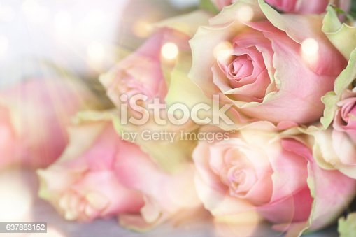 638784780 istock photo Bouquet of roses in sunlight 637883152