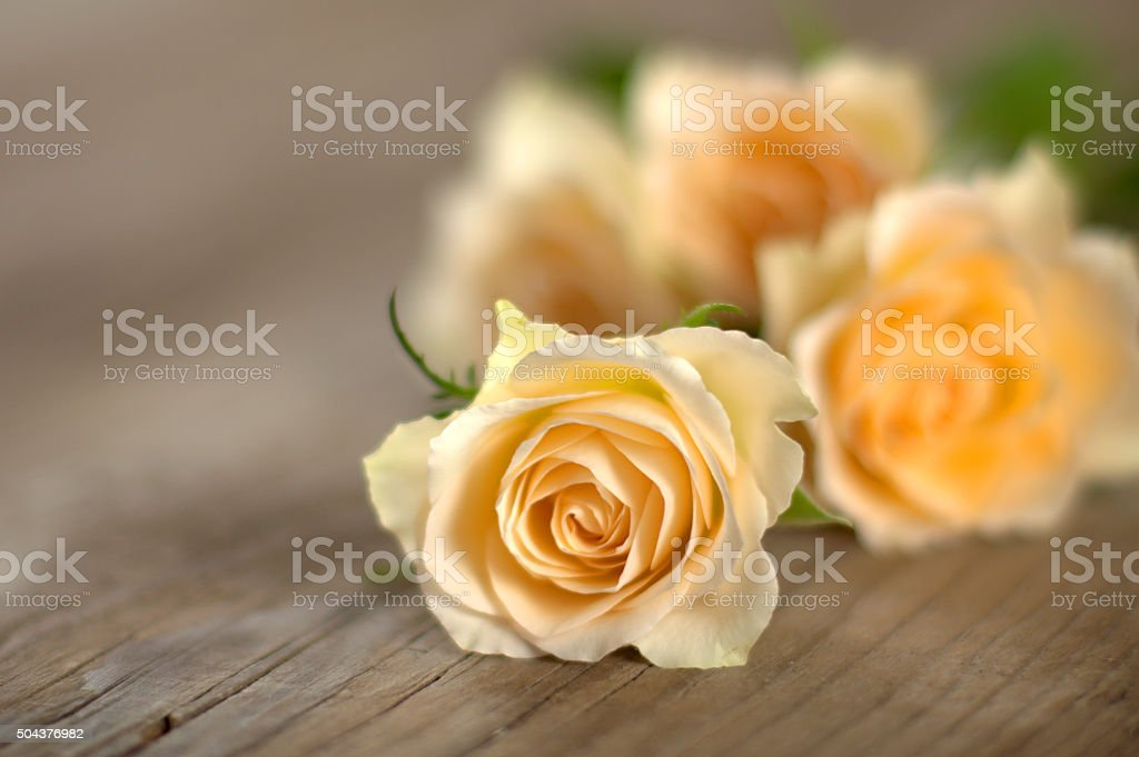 Bouquet of roses on wooden boards stock photo