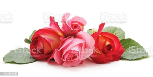 Bouquet of roses picture id1124638097?b=1&k=6&m=1124638097&s=612x612&h=qz3zgzzpgjy8wzmjgsrgenolymxu vrox 7mwp4d 6k=