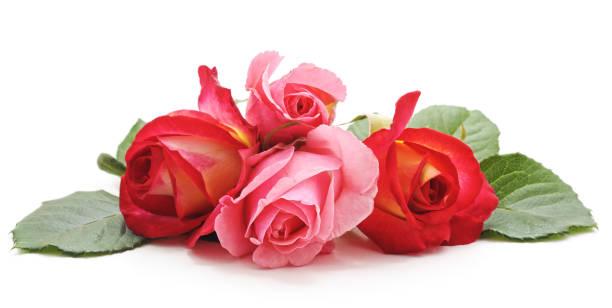 Bouquet of roses picture id1124638097?b=1&k=6&m=1124638097&s=612x612&w=0&h=kfsu 7waadvwjtpnvltdbeaorruepulhljkeu7wrihq=