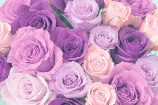 Bouquet of roses picture id915854360?b=1&k=6&m=915854360&s=612x612&w=0&h=274ngpvkqxi u93znmiool2qeaom3pyco w8dpcvsb0=