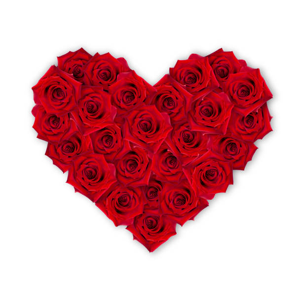 Bouquet of scarlet roses in the shape of a heart on a white day red picture id1140063151?b=1&k=6&m=1140063151&s=612x612&w=0&h=iiusw6ftxmz 74npcyykdhs5mw9npukfrppzvz96cuy=