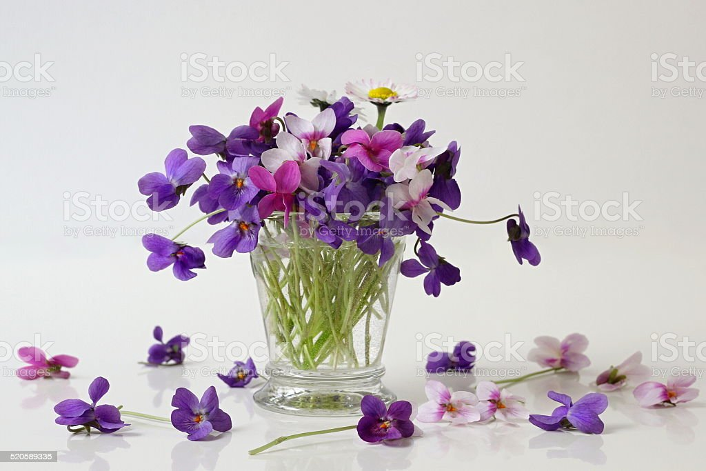 Bouquet of spring colorful violets flowers in a vase. Dog violets. stock photo
