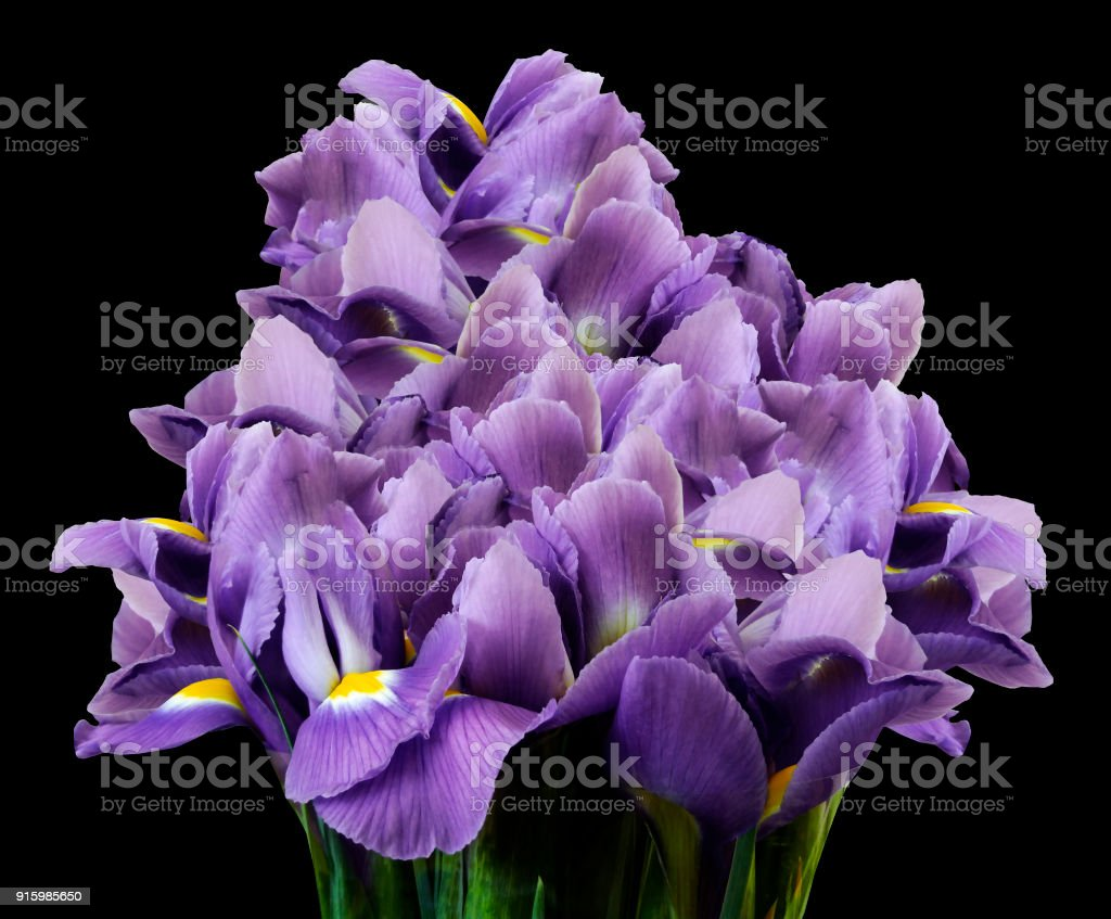 A Bouquet Of Spring Flowers Of Purple Irises On The Black Isolated