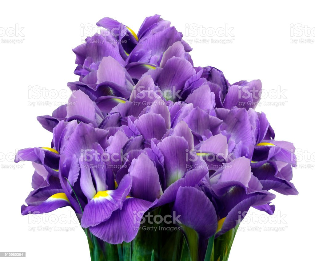 A Bouquet Of Spring Flowers Of Violet Irises On A White Isolated
