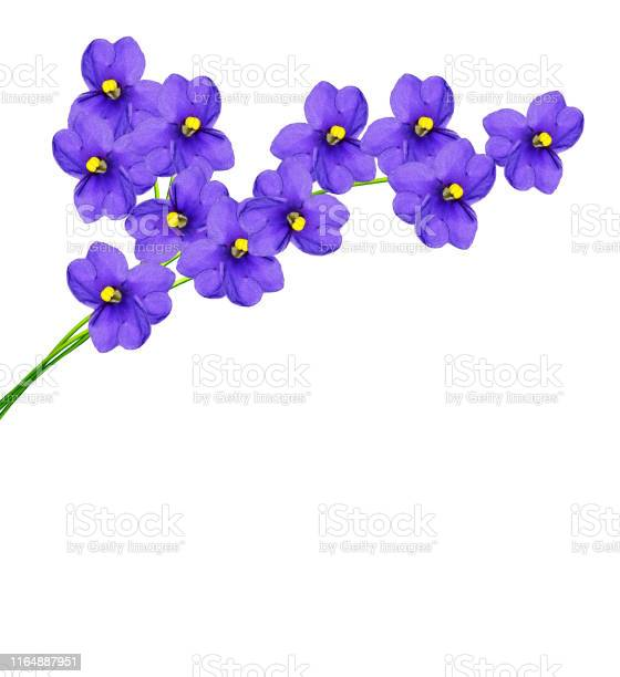 Bouquet of spring flowers picture id1164887951?b=1&k=6&m=1164887951&s=612x612&h=klxvfuen umebzcegf0rnpai2g8uwsmhj ii76jqivw=