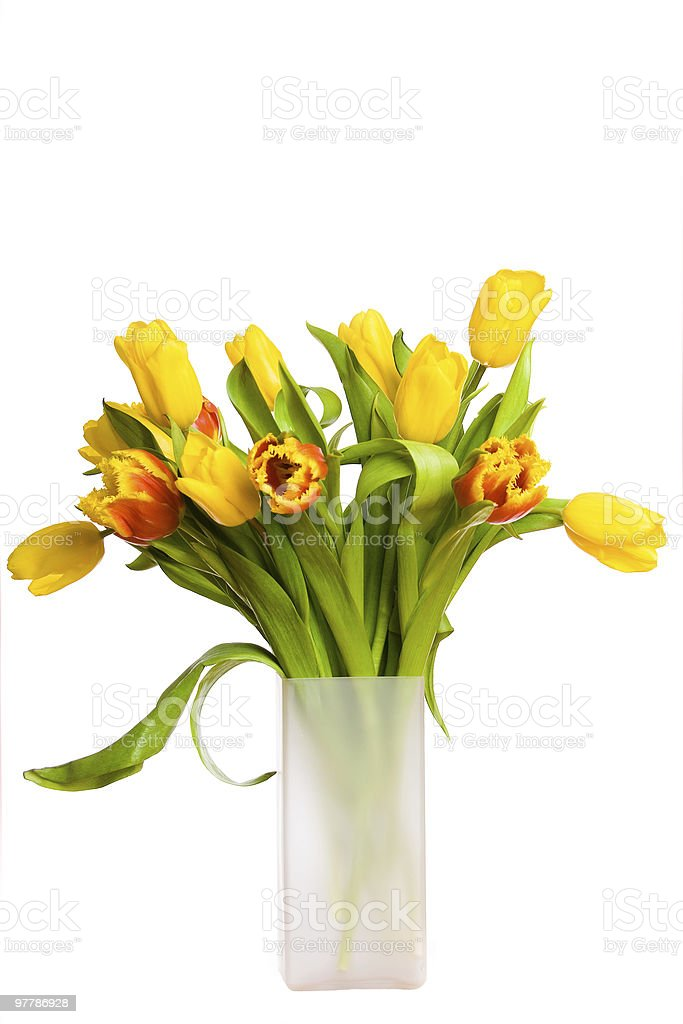 Bouquet of spring tulips royalty-free stock photo