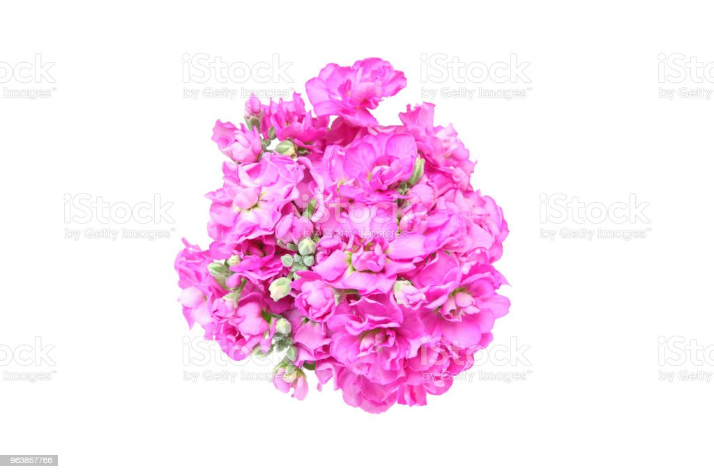 bouquet of stock in a white background - Royalty-free Bouquet Stock Photo