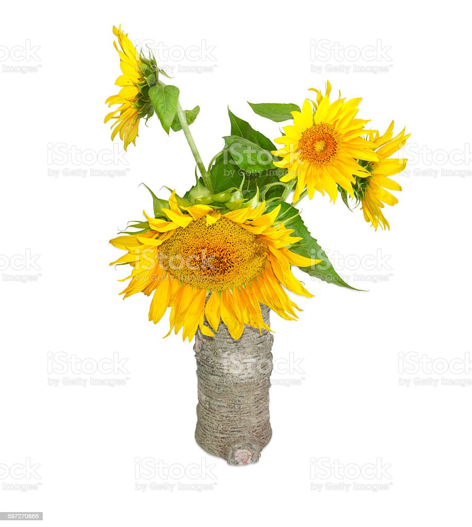 Bouquet of sunflower in a vase on a light background royalty-free stock photo