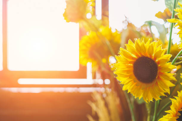 Bouquet of sunflowers on the window at home. concept of natural and decoration. stock photo