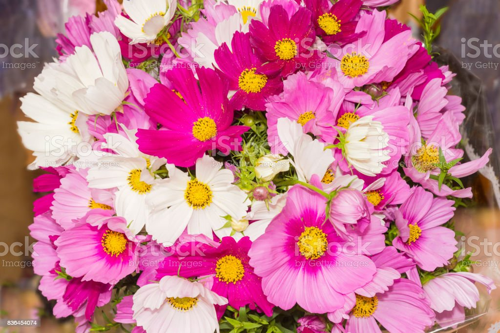 Bouquet Of The Cosmos Flowers Different Colors Closeup stock photo ...
