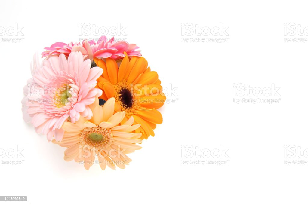 Pictured bouquet of transvaal daisy in a white background.