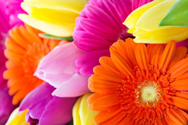boeket tulpen en gerbera - bloemstuk stockfoto's en -beelden