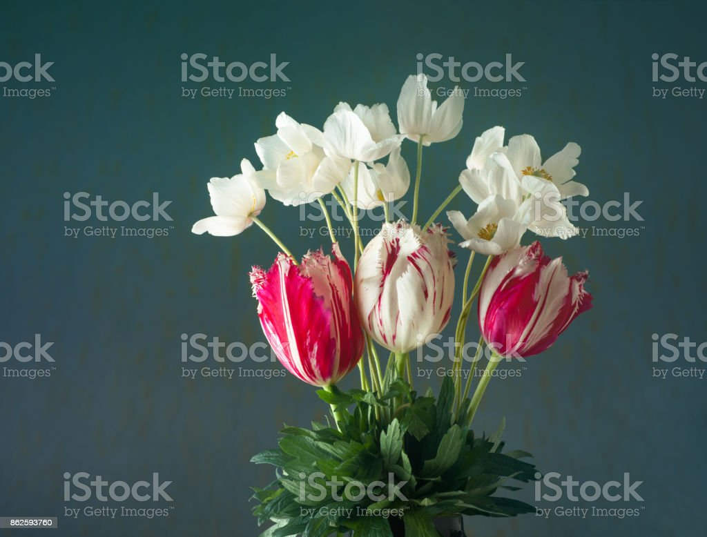 Bouquet of tulips and white anemones flowers on cyan background stock photo