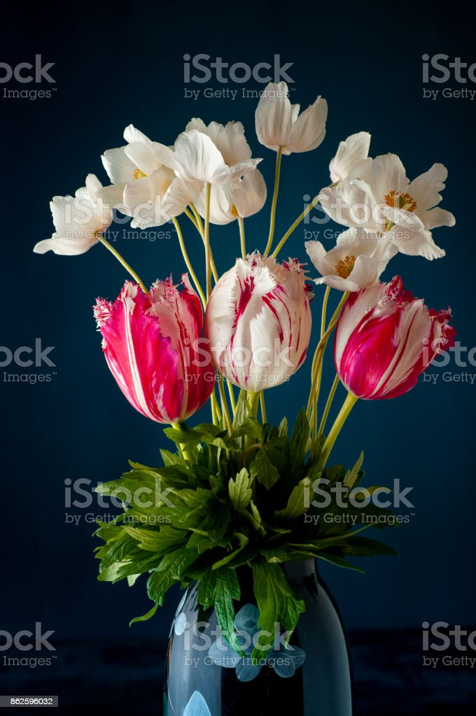 Bouquet of tulips and white anemones flowers on dark blue background stock photo