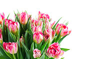 Bouquet of tulips flowers