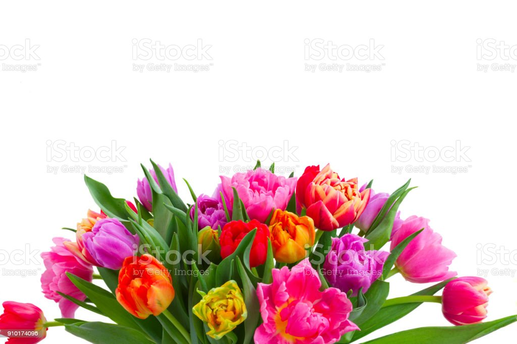 Bouquet of tulips flowers stock photo
