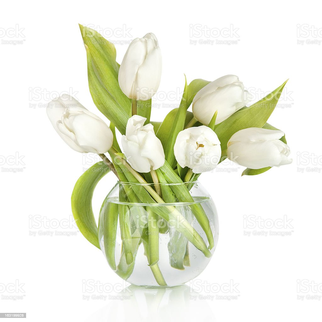 Bouquet of tulips in the vase isolated on white background stock photo