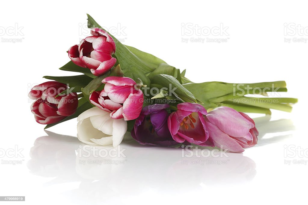 bouquet of tulips isolated on white background stock photo