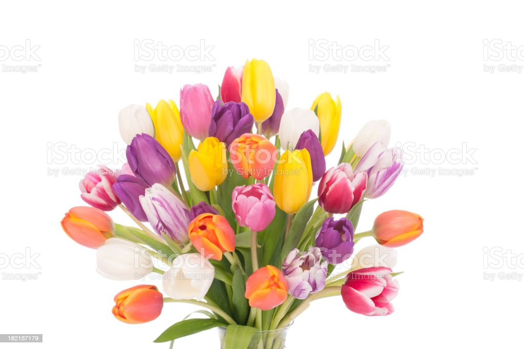 Bouquet of Tulips Isolated on White stock photo