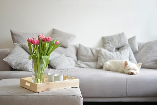bouquet of tulips on a tray and in the background with white dog