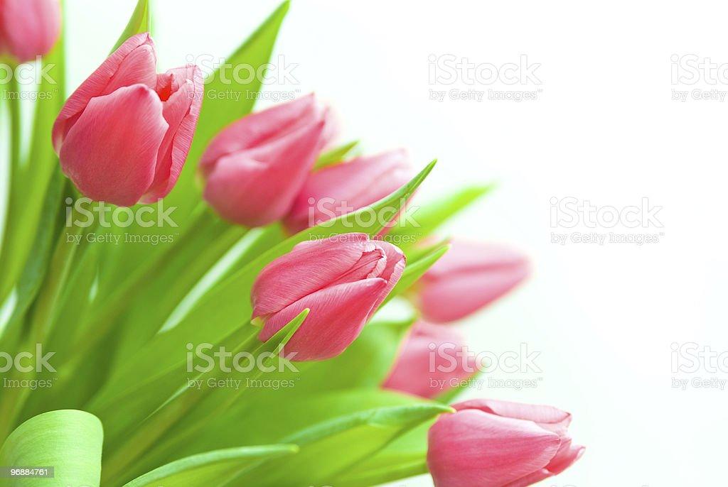 Strauß Tulpen Lizenzfreies stock-foto