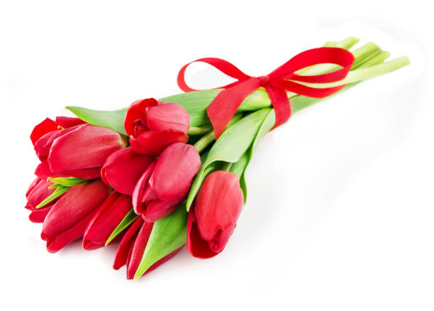 Bouquet of tulips red with bow stock photo