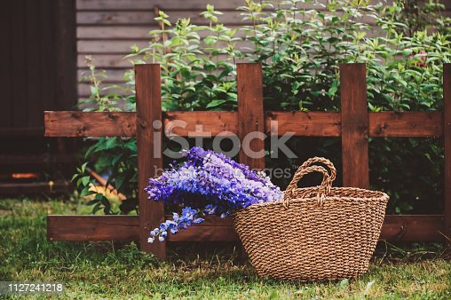 bouquet of various multi colored delphiniums in basket in summer garden with wooden house and fence on background