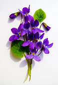 bouquet of violets isolated on white background\