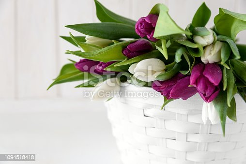 921112244 istock photo Bouquet of white and purple tulips in basket in front of white wooden wall. Top view. Flat lay. Copy space. Valentines day, mothers day, birthday, wedding celebration concept. 1094518418