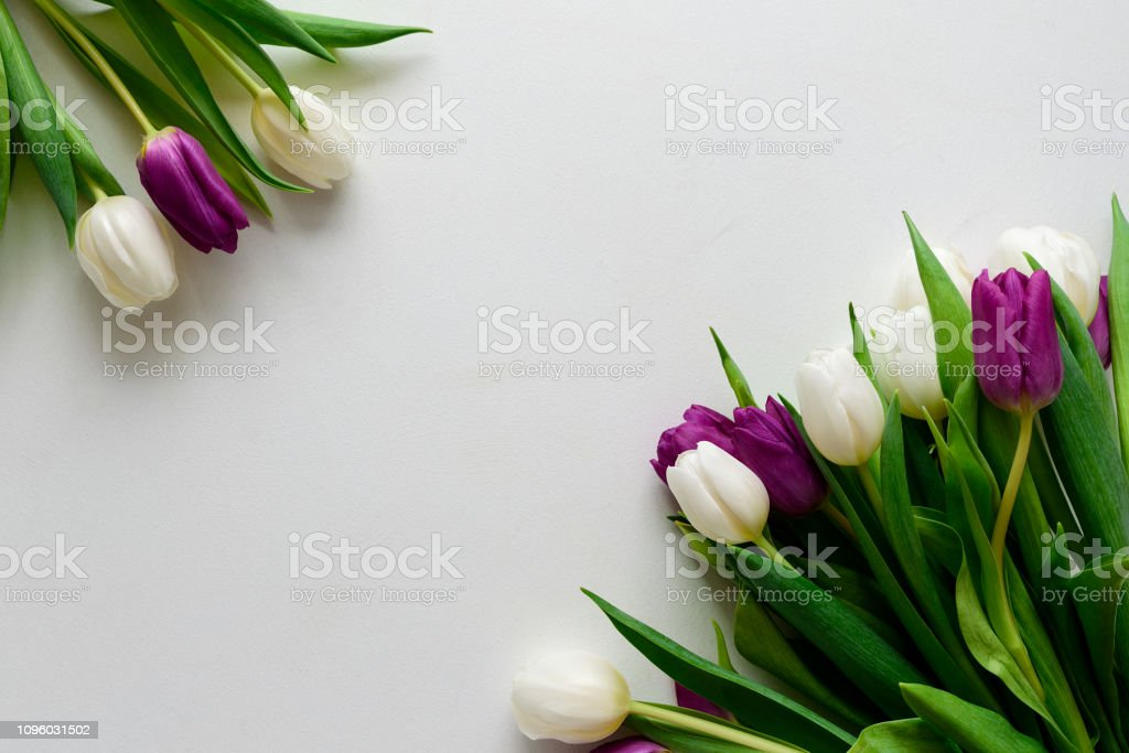 Bouquet of white and purple tulips on white wooden background. Top view. Flat lay. Copy space. Valentines day, mothers day, birthday, wedding celebration concept. royalty-free stock photo