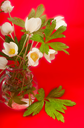 istock bouquet of white anemones 494983261