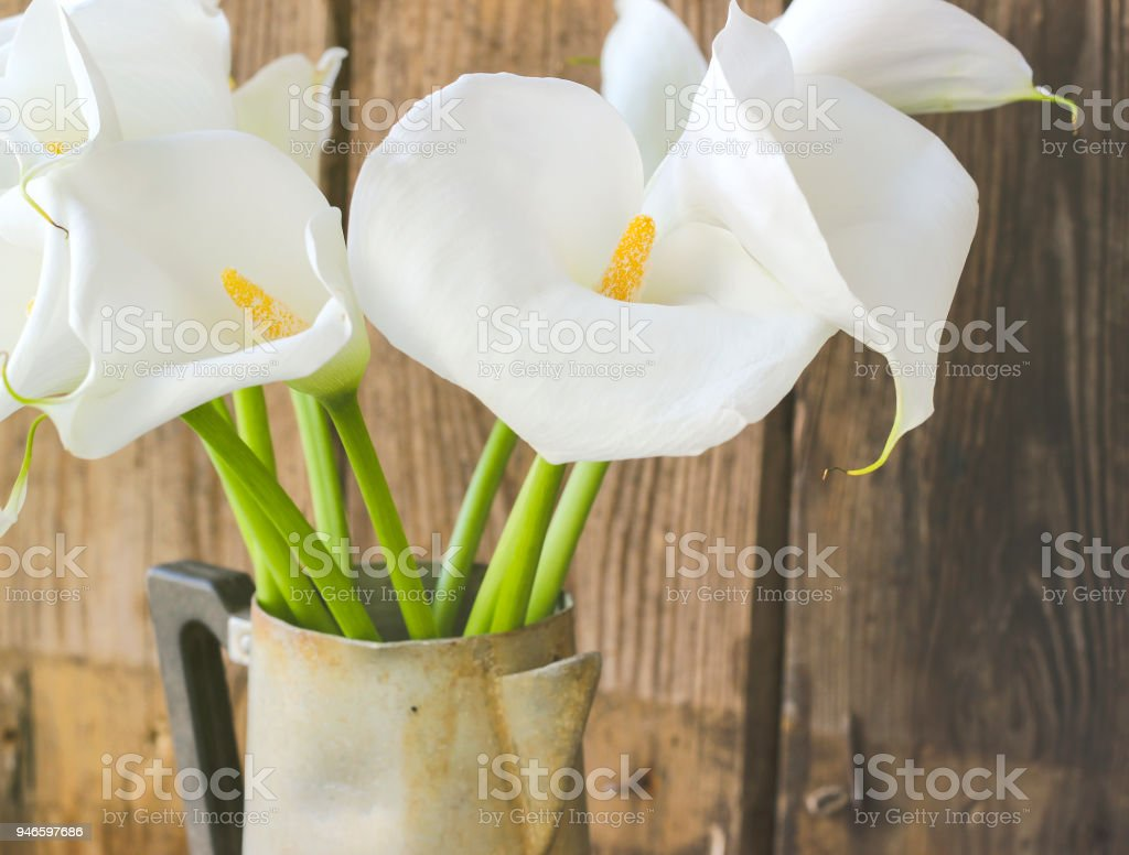 Bouquet of white calla lily flowers stock photo more pictures of bouquet of white calla lily flowers royalty free stock photo izmirmasajfo
