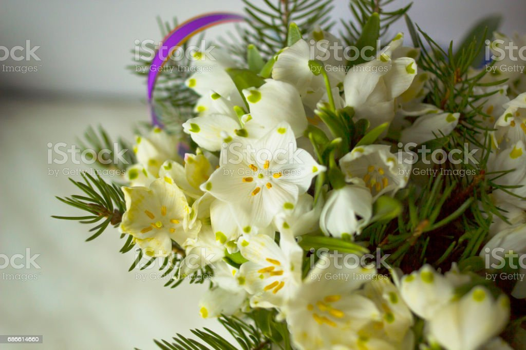 Bouquet of white flowers leucojum and needles leucojum vernum called bouquet of white flowers leucojum and needles leucojum vernum called spring snowflake flower royalty mightylinksfo
