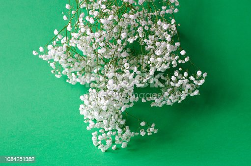 1147995495 istock photo A bouquet of white gypsophila on a green background. 1084251382