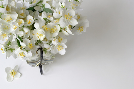 Bouquet of white jasmine flowers in vase. Mock-orange - Philadelphus flowers.