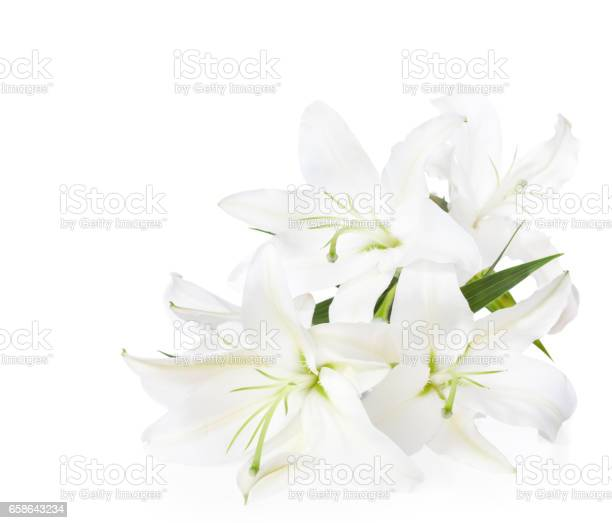 Bouquet of white lilies picture id658643234?b=1&k=6&m=658643234&s=612x612&h=zqi7ofylwrflmpiyarzl cxggvtu69sxzf9rkldp1ls=