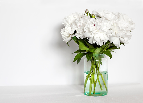 Bouquet of white peonies in a glass vase on white wall background