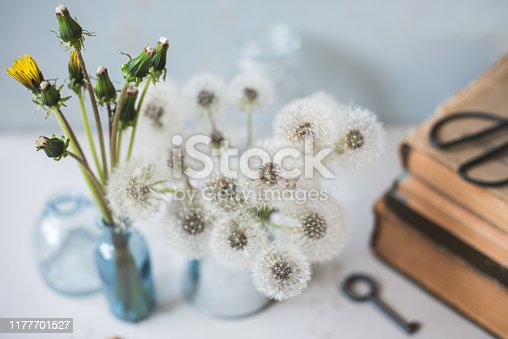 Bouquet of white summer blowball dandelions in a metal steel milk jug, old books and glass bottles on a light gray and blue background