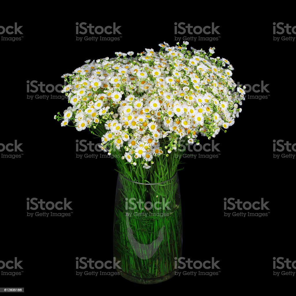Bouquet of wild daisies in a glass vase. stock photo