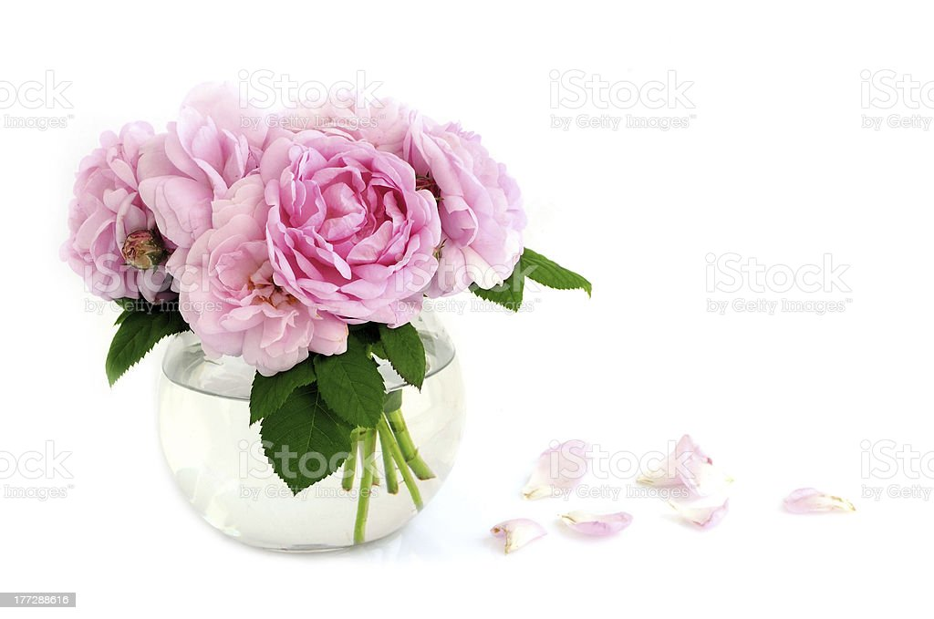Bouquet of wild rose stock photo
