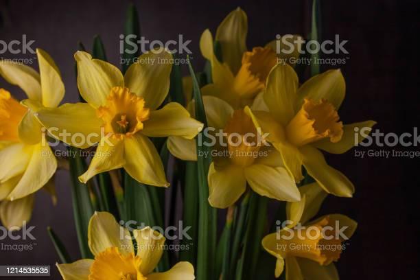 Bouquet of yellow daffodils on dark background spring blooming blog picture id1214535535?b=1&k=6&m=1214535535&s=612x612&h=fywe47mhjerdf6vphkgqumoarvdfc87g4uibfxaw0t4=